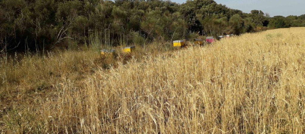 Abeille noire l'apiculture biodynamique