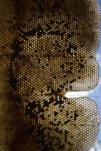 une école une ruche